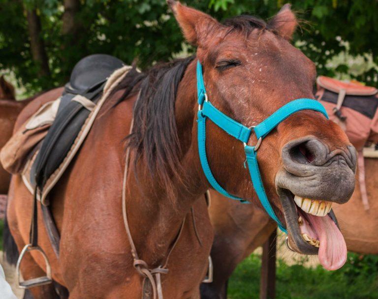 Cavallo simpatico.
