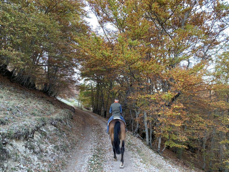 Guida equestre